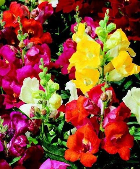 fiori recisi nomi fiori estivi le foto di quelli pi 249 belli e decorativi