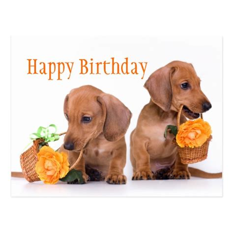 Dachshund Birthday Meme - dachshund birthday postcard zazzle