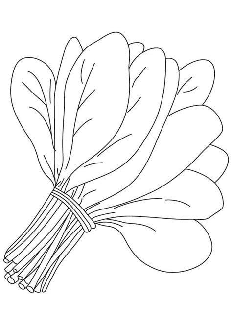 green leaf coloring pages bunch of spinach leaves coloring page download free