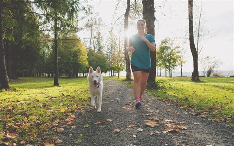 weight management for pets weight management for pets a key ingredient for a