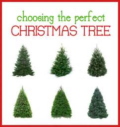 Christmas tree types images amp pictures becuo