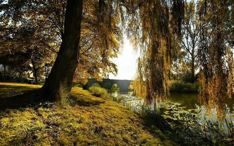 willow tree wallpaper gallery