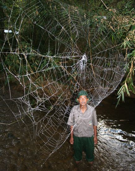 bid web pic of the day world s largest spider webs and
