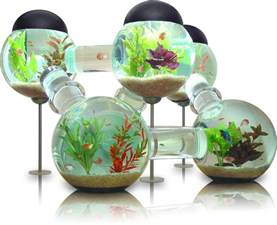 Hanging Bubble Chair Tropical Freshwater Aquarium Fish Pictures Just For Sharing