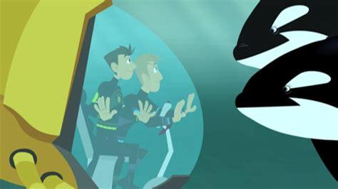 this orca likes sharks kratts wiki fandom powered