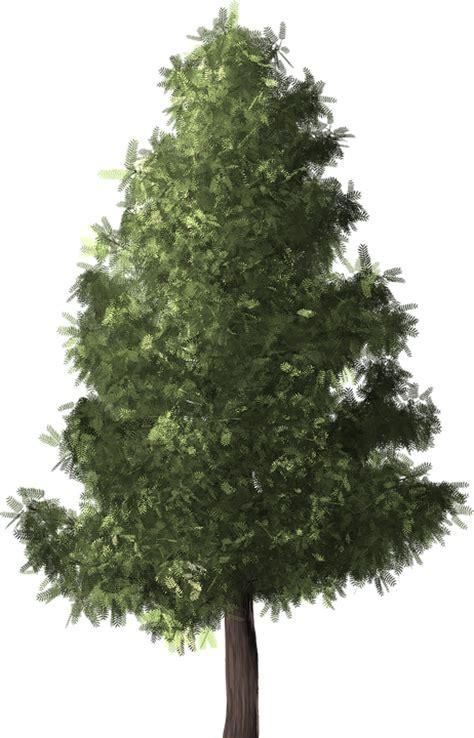 Pohon Natal Berkualitas Tipe Snow White Pine Tree Ukuran 9ft 2 7 Mtr pine tree 183 free image on pixabay