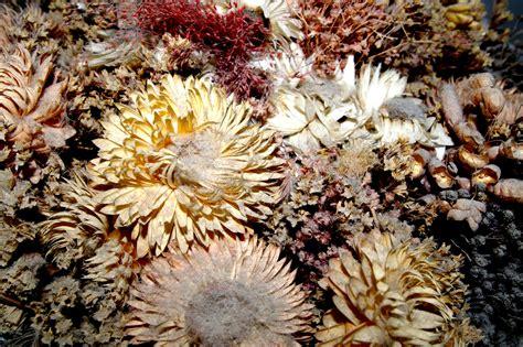decoracion con flores secas diferentes ideas para secar flores y plantas