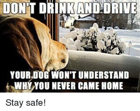 Dog Driving Meme - 25 best memes about dog dog memes