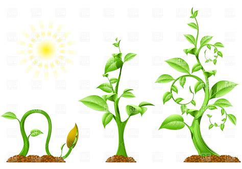 growing plant clipart clipart suggest