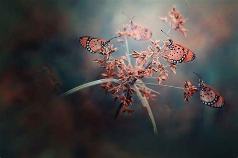 Butterfly Biru langit biru senja sendu am fm studios magazine