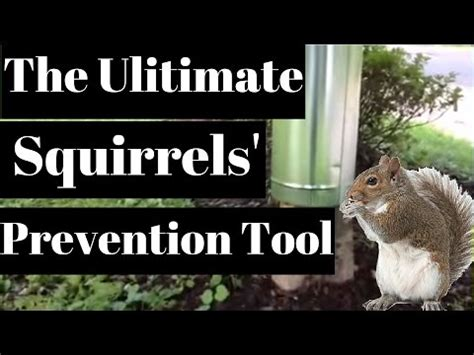 keep squirrels fruit trees how to keep rodents out of your car 2016 car