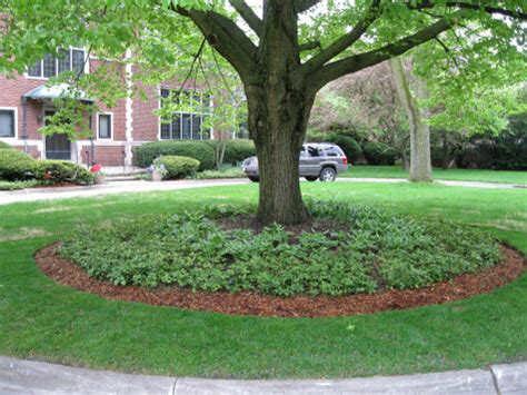Landscaping Ideas Around Trees You Are On The Ideas Page Home Construction Management Specialty Images Frompo