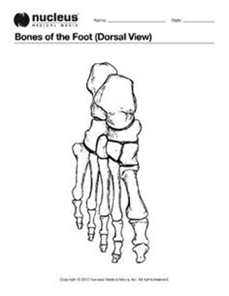 anatomy coloring pages and bone jewelry on pinterest