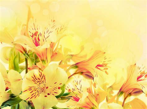 Weiß Blühende Blumen by Die 64 Besten Blumen Hintergrundbilder