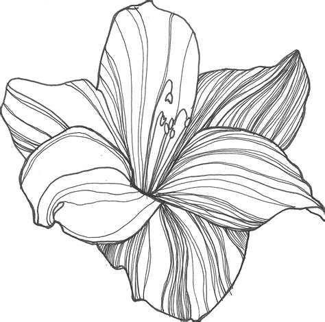 drawing clipart flowers reference drawings pictures of flower drawings