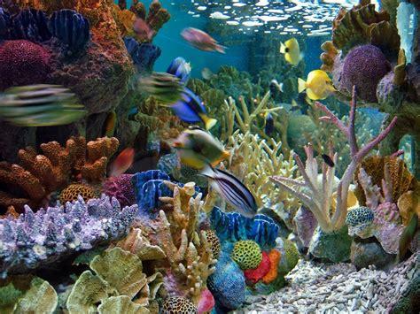Pompa Akuarium Laut pemandangan eksotik dalam akuarium air laut akuarium