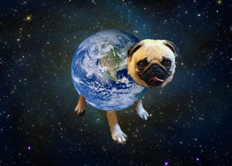 wrecking pug pug dressed up in a wrecking costume with miley cyrus it yeah lets do it