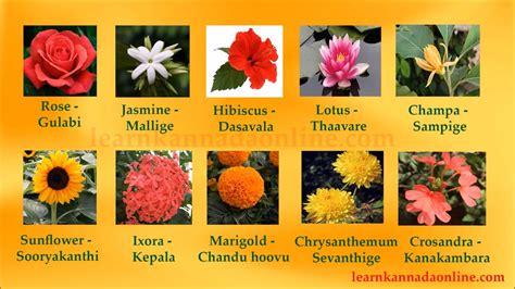 flower names kannada flower names  kannada