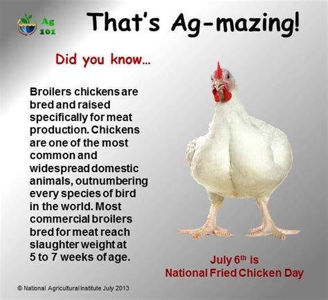 chicken fact or chicken the chicken whisperer s guide to the facts and fictions you need to to keep your flock healthy and happy books 122 best images about chicken education on