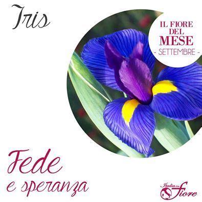 il fiore di iris 232 considerato simbolo di fede e di