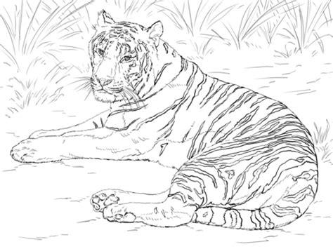 advanced tiger coloring pages coloriage tigre de sib 233 rie couch 233 coloriages 224