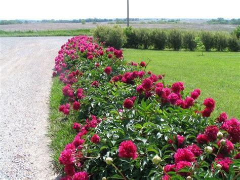 fiori da giardino fiori da giardino perenni fare giardinaggio fiori perenni