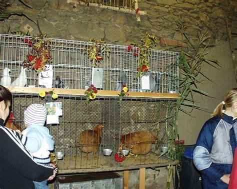 kulturscheune dresden rassegefl 252 gelz 252 chterverein neustadt sachsen u umgebung