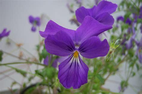 Fleur Violette by La Fleur Violette Map Titecagne