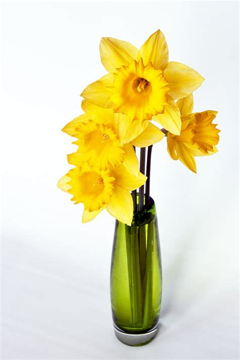 Daffodil Vase by Yellow Daffodils In A Green Vase By Kent Sorensen