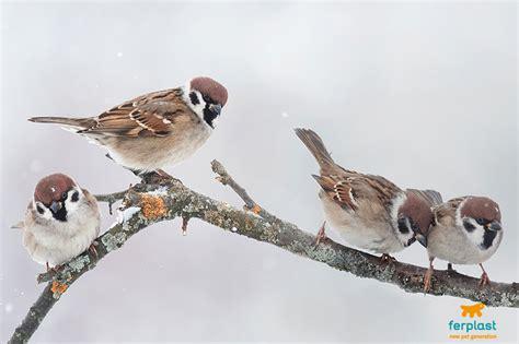 uccelli da giardino quali sono gli uccelli invernali abitano i nostri