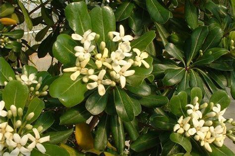 nomi piante da giardino arbusti perenni piante da giardino conoscere gli