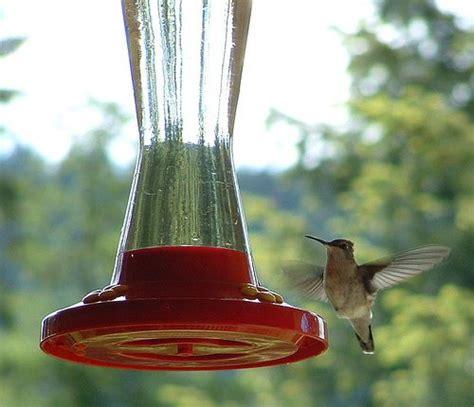 hummingbird feeder ratio 25 best ideas about hummingbird food on hummingbird feeder food