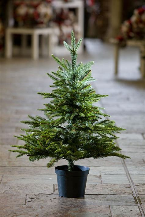 3ft potted english pine feel real artificial christmas