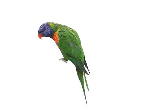 How To Add Privacy To Backyard Rainbow Lorikeet We Have A Grapevine In Our Backyard