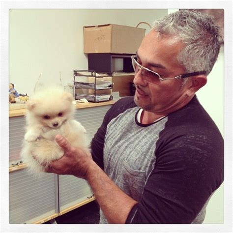 cesar millan pomeranian benson cesar millan s pack pomeranians ps and the o jays