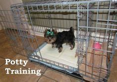 how to potty a yorkie puppy step by step best 25 potty humor ideas only on meaning of litter