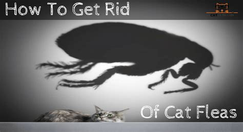 how to get rid of cats in your backyard cat veteran everything i need to know i learned from my
