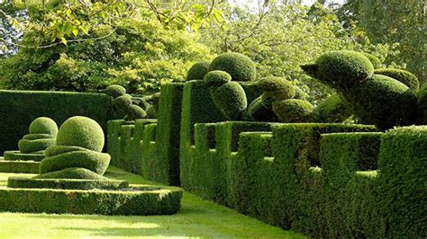 alberi colorati da giardino 10 piante ideali per siepi da giardino