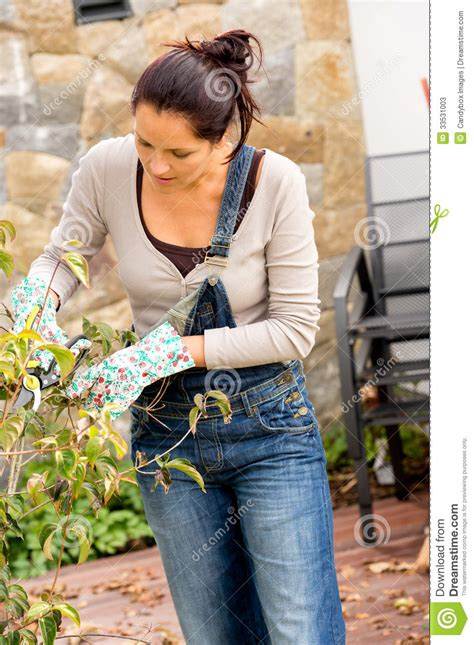 bush trimming women woman pruning autumn tree clippers garden hobby stock