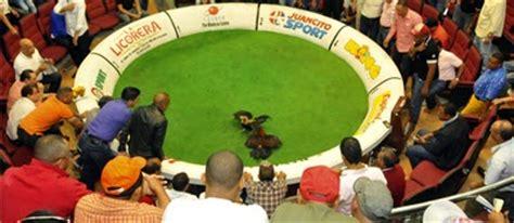 gran jornada gallistica de 40 peleas de gallos en santiago emocion gallistica con manuel perell 195 179