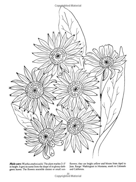 favorite wildflowers coloring book dover nature coloring