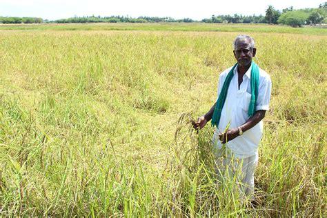 farmer s tamil nadu farmers fight drought with organic farming