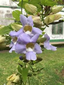Limbe Botanic Garden Garden Tree Picture Of Limbe Botanic Garden Limbe Tripadvisor