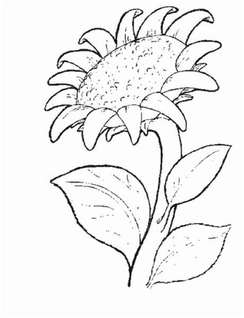 Free Coloring Pages Printable Sunflower Coloring Pages Sunflower Coloring Pages