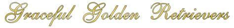 auburn golden retriever graceful golden retrievers auburn