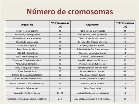cual es el numero del celular de mariana esposito las cromosomas y divisi 243 n celular