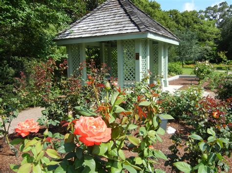 Leu Gardens by Picture Harry P Leu Gardens In Orlando Fl