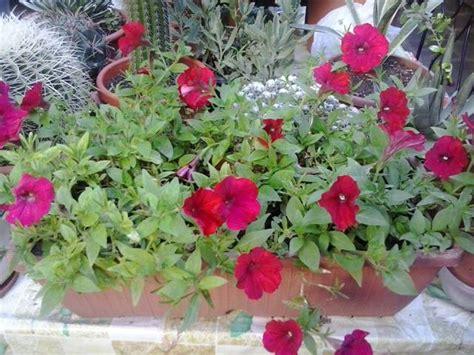 balconi fioriti in estate scoppia l estate sole e dei colori cieli azzurri