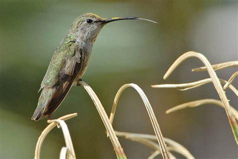 hummingbird feeder food food