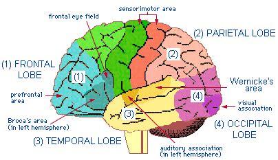 circulation motor sensory patts nervous system